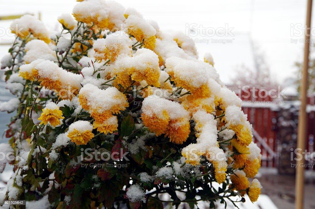 Première neige. photo libre de droits