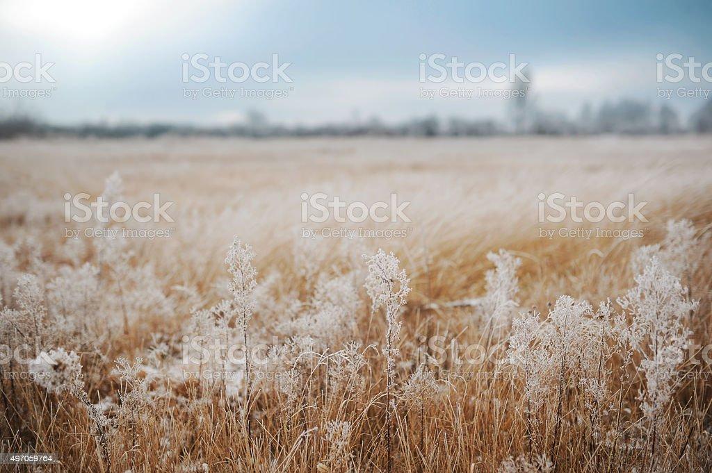 First snow. Winter landscape stock photo