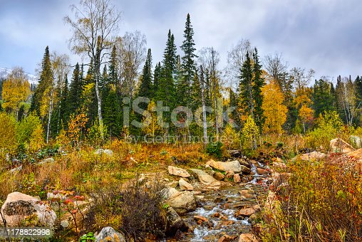 First snowfall in October mountain forest with  creek, streaming between big boulders and waterfall. Multicolored autumn landscape and white snow on fir trees branches - change of seasons concept