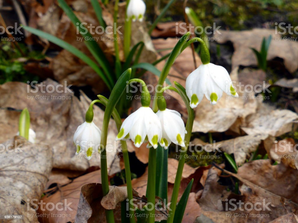 First Spring Flowers Stock Photo More Pictures Of Autumn Istock