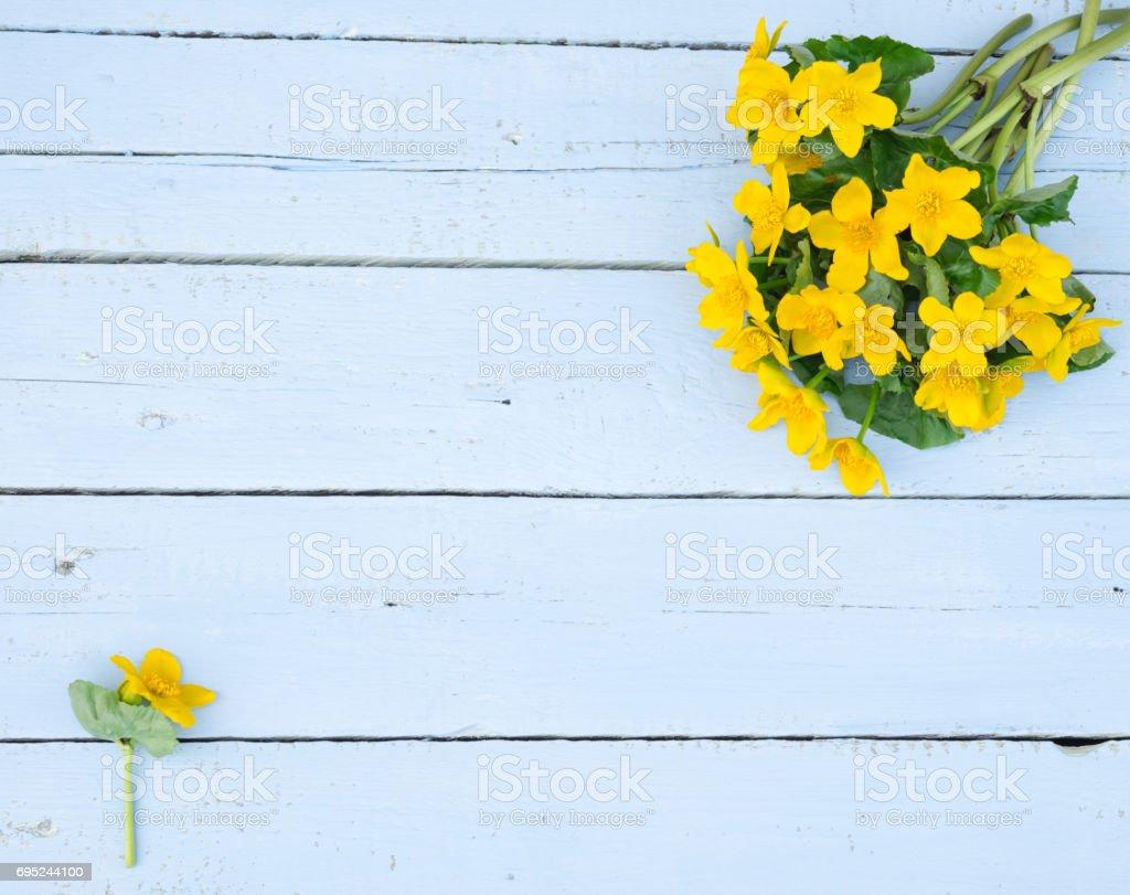 First spring flowers wildflowers yellow flowers on a light blue first spring flowers wildflowers yellow flowers on a light blue shabby wooden background mightylinksfo