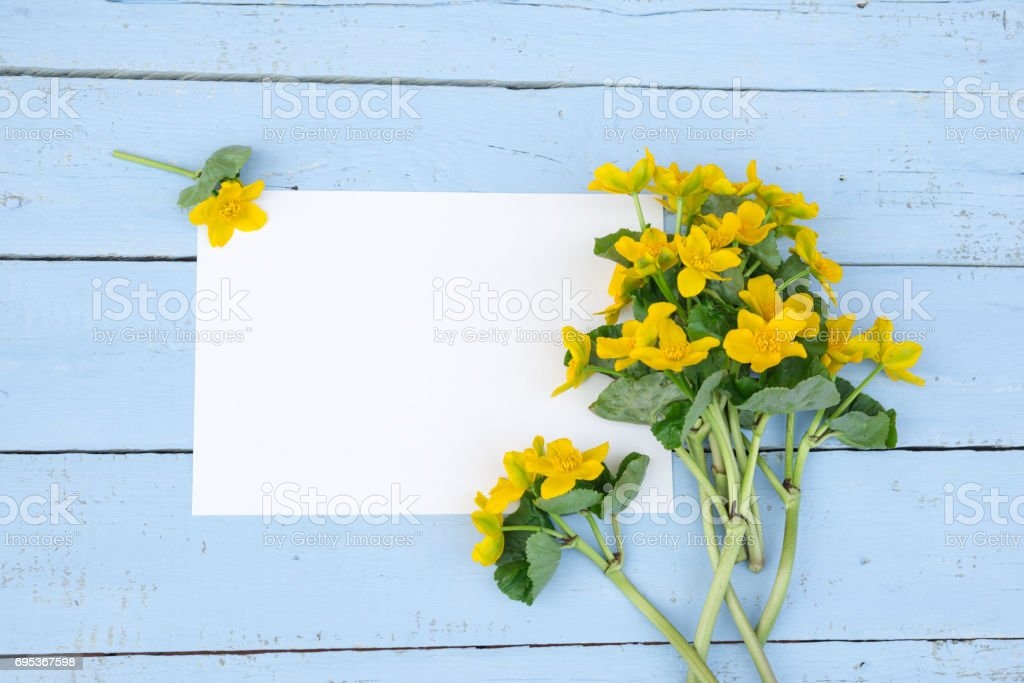 Fotografia De Primera Primavera Flores Amarillas Flores Silvestres