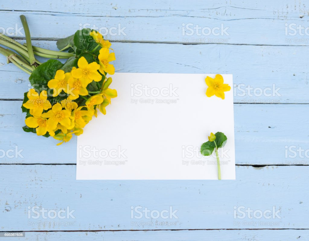 First Spring Yellow Flowers Wildflowers With Blank Paper On Blue