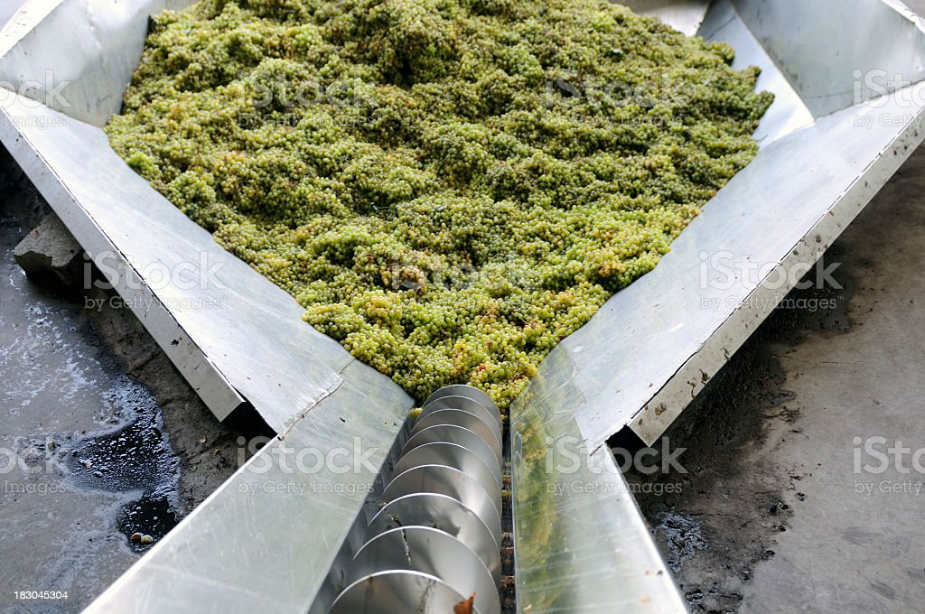 First Step Of Winemaking stock photo