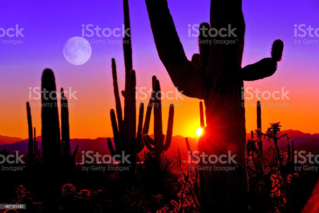 Premier coucher de soleil à Saguaro National Park, à proximité de Tucson, en Arizona. - Photo