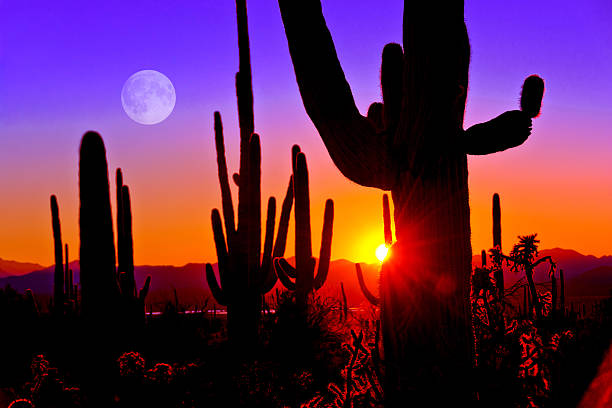 First Sunset at Saguaro National Park near Tucson Arizona. stock photo