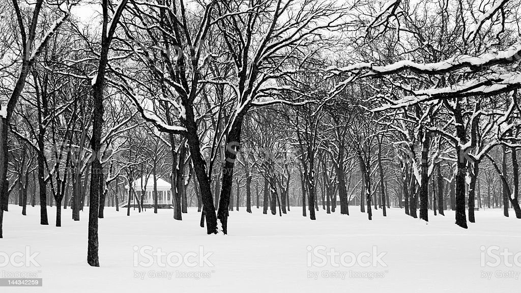 FirstSnow royalty-free stock photo