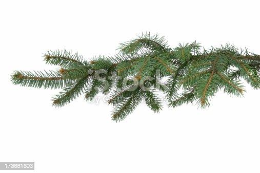 istock Fir-tree branch 173681603
