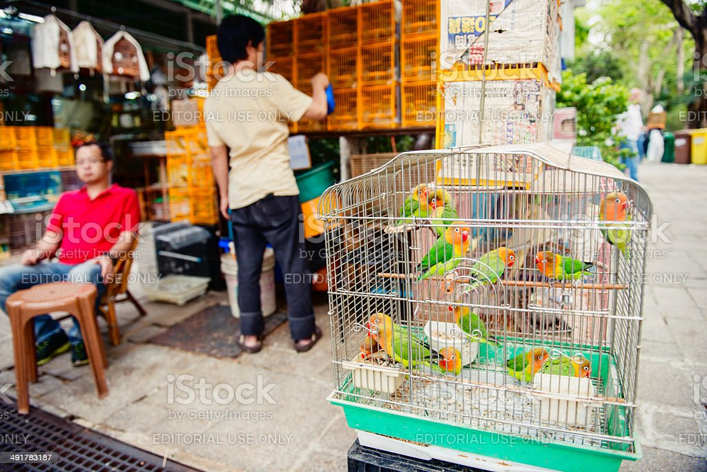 Fischer Lovebirds For Sale At Kowloon Bird Market Hong Kong Stock