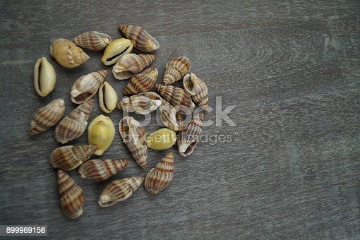 istock Fischerei Gesetze und Verordnungen 899969156