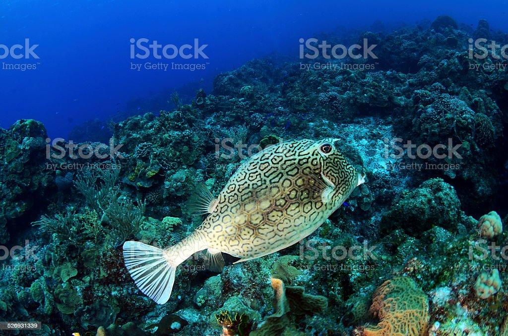 Fish 3 stock photo