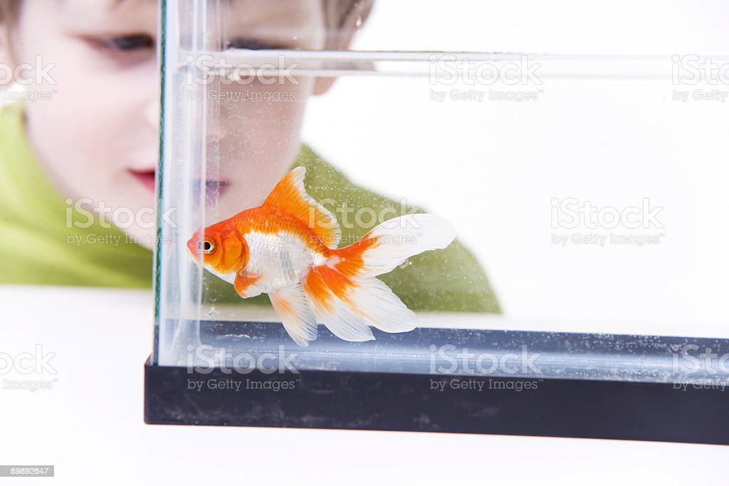 Fish and Boy royalty-free stock photo