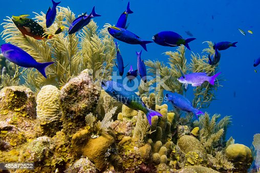 istock Fish and Coral 485872522