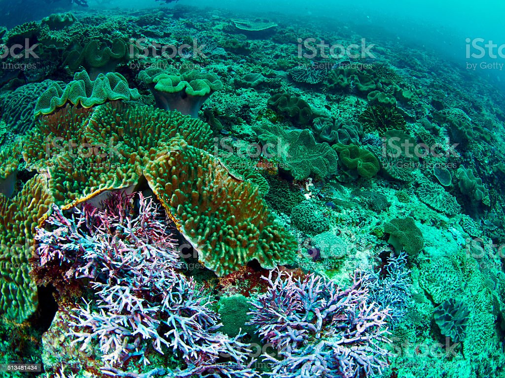 fish and coral stock photo