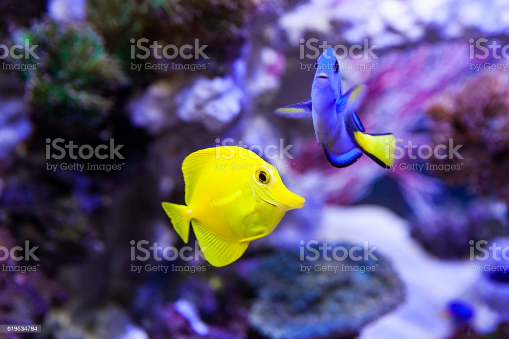 Fish and corals stock photo