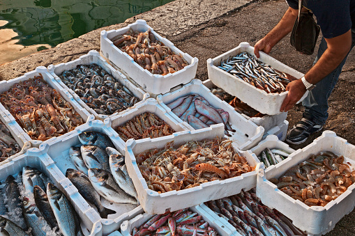 fish and crustaceans on the quay of the Adriatic sea fishing port