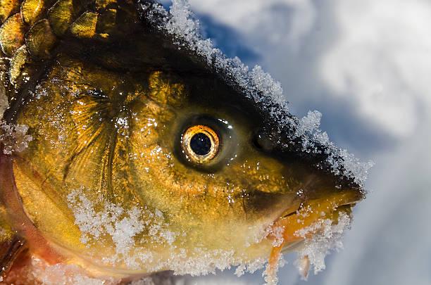 fisch und frozen lake - crappie angeln stock-fotos und bilder