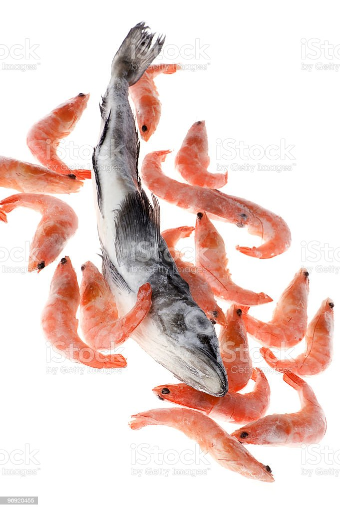 fish and shrimp royalty-free stock photo