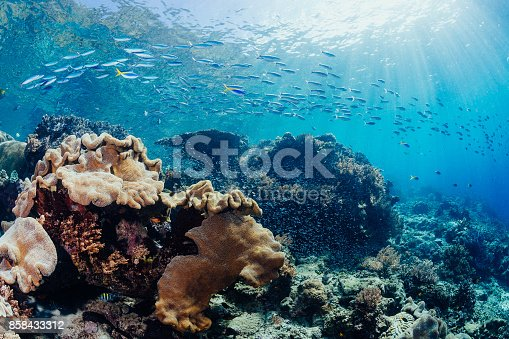 Fish with sun beams coming through coral reef