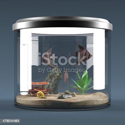 istock fish aquarium 479044464