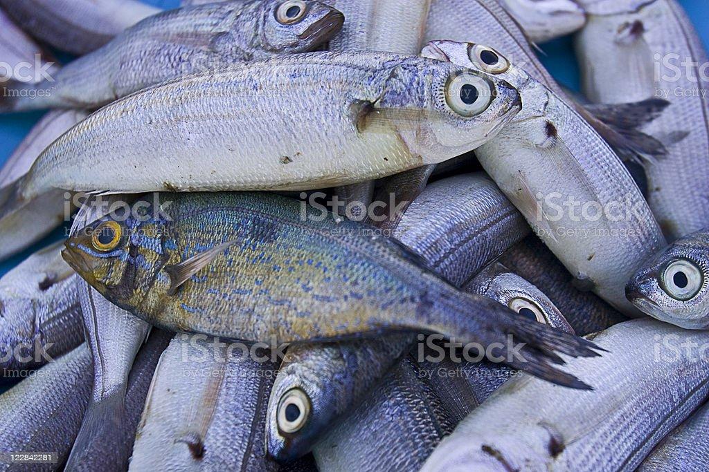 fish at market royalty-free stock photo