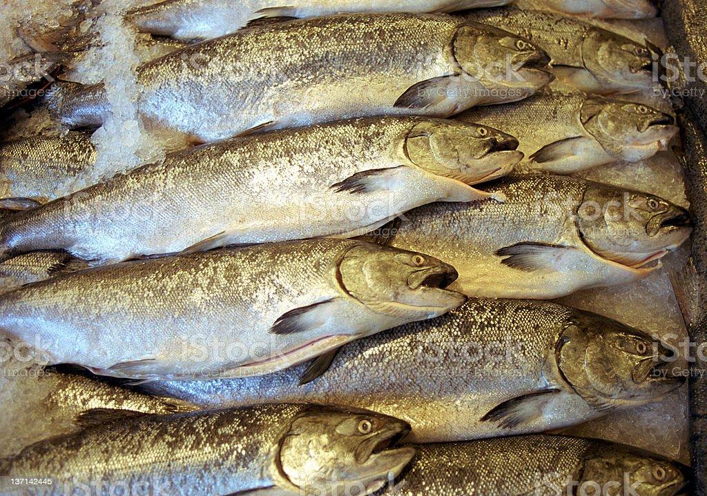 Fish at Market stock photo