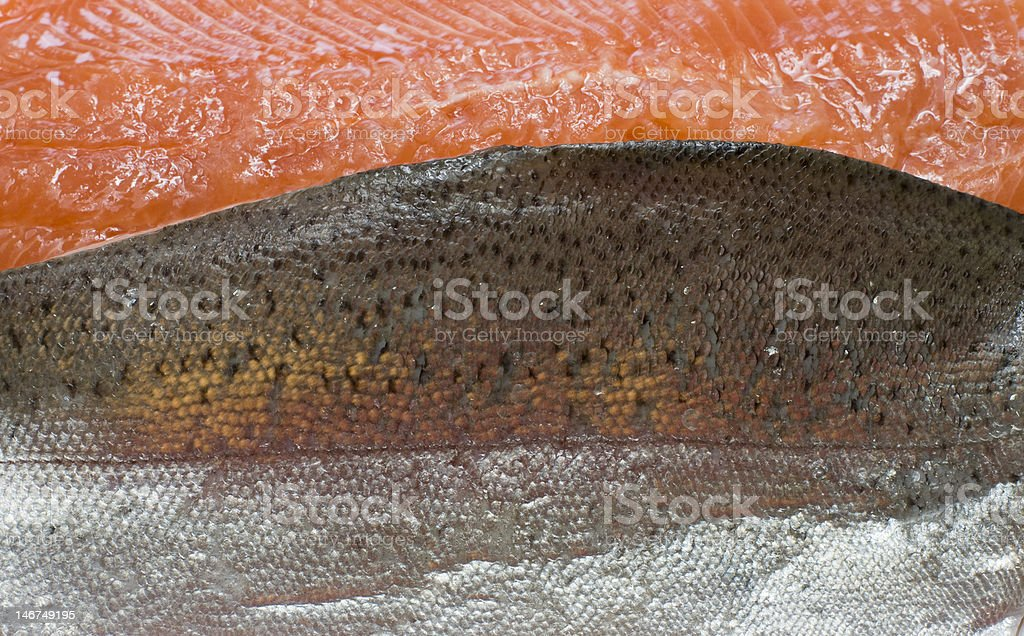 Fish background - trout royalty-free stock photo