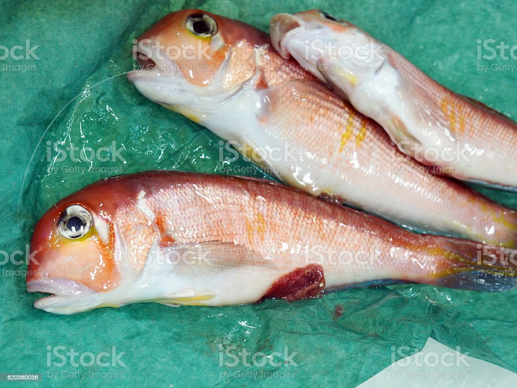 Fish, Blanquillo, Japanese tilefish foto de stock royalty-free