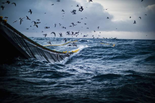 fish boat vessel fishing in a rough sea - uccello marino foto e immagini stock