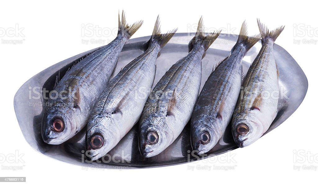 fish bogue stock photo