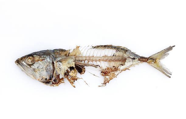 魚の骨 - 腐敗 ストックフォトと画像