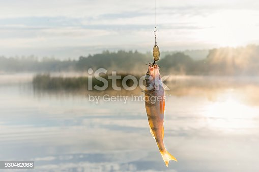 istock Fish caught on bait. 930462068