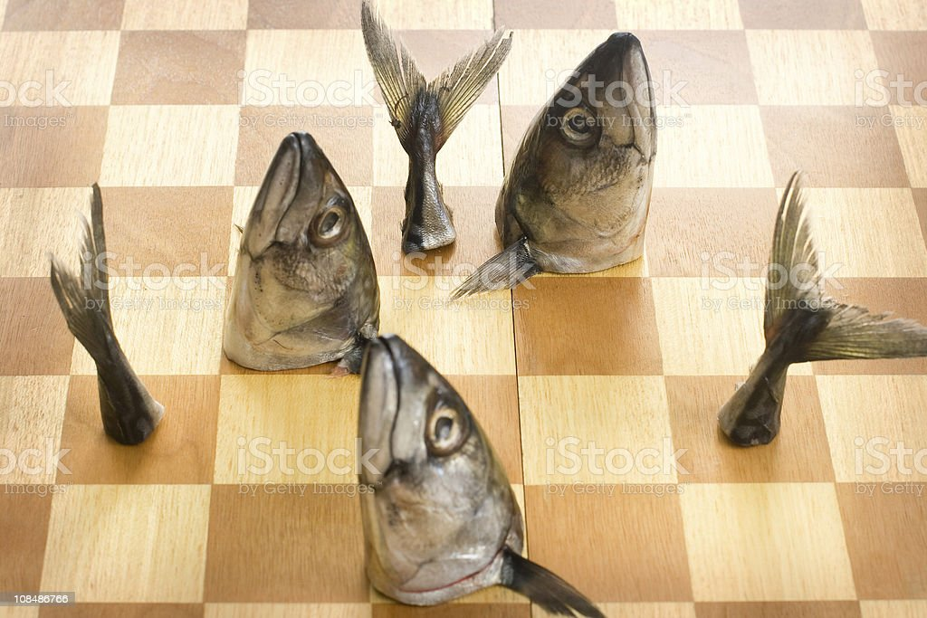 Fish Chess royalty-free stock photo