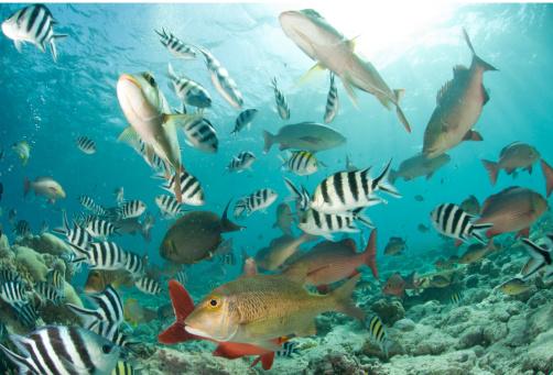 Fish Diversity Stock Photo - Download Image Now