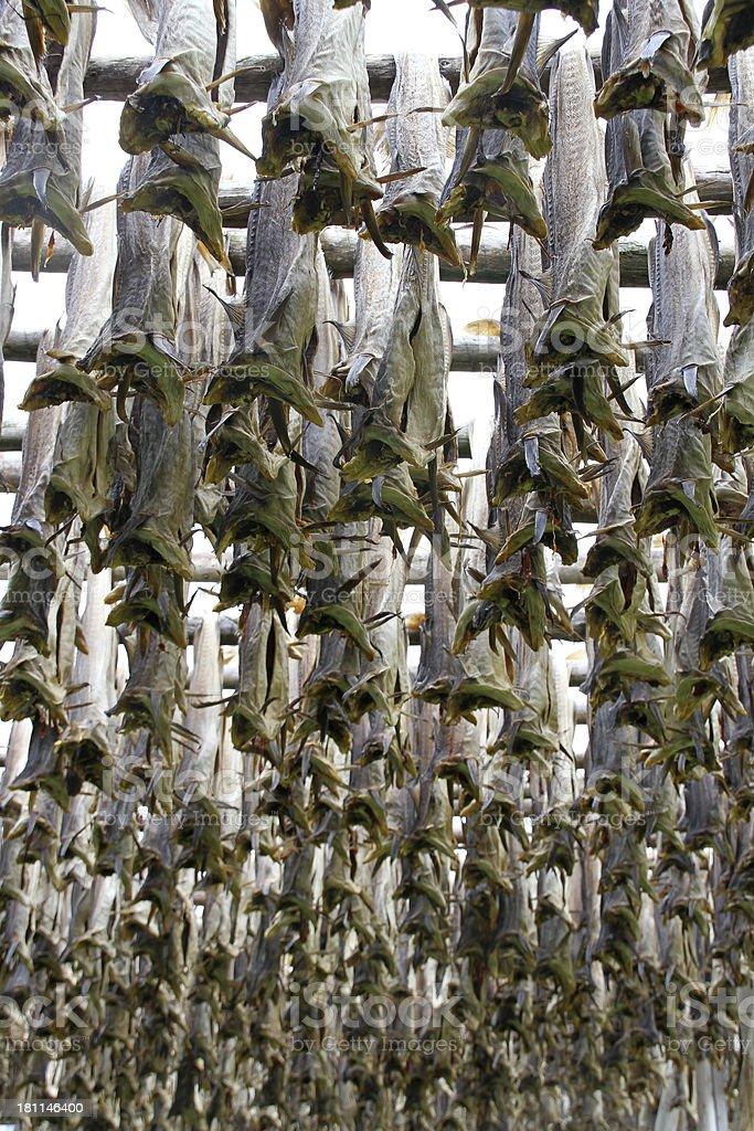 fish drying close up royalty-free stock photo