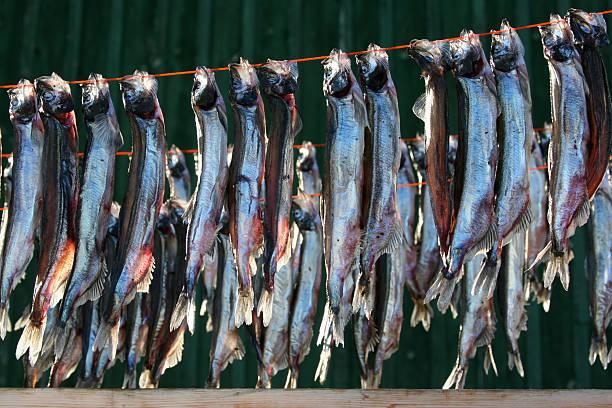 Fish drying in the sun, Ilulissat stock photo