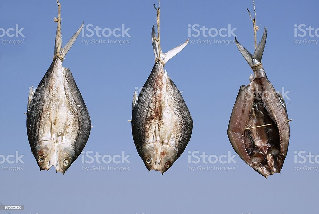 Fish Drying in the Sun royalty-free stock photo
