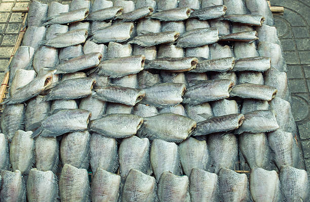 fish trocknen im sonnigen tag - kochinsel stock-fotos und bilder