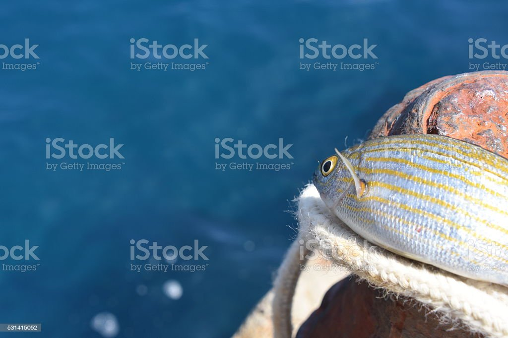 Fish eager to return to the sea stock photo