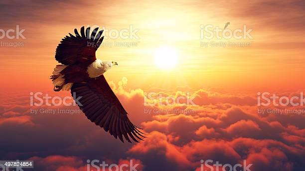 Fish eagle flying above clouds picture id497824854?b=1&k=6&m=497824854&s=612x612&h=npsaioo5nkfj01aomxud i7bghtmclmmxwmwe699z6c=