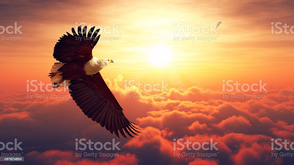Fish Eagle flying above clouds stock photo