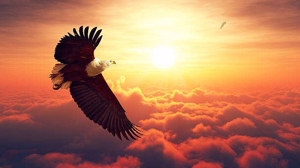 fish eagle flying above clouds - eagle stock photos and pictures