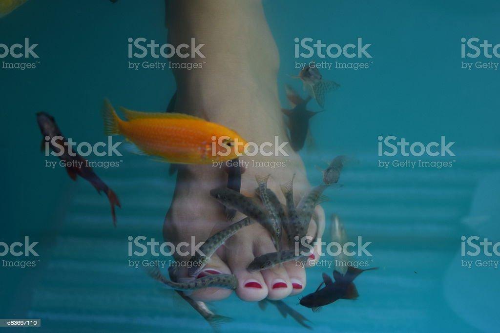 Fish eating skin close up. stock photo
