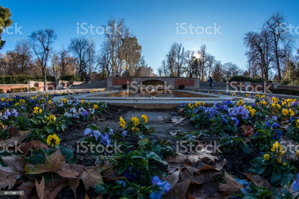 Fish eye 180 view of one of the avenues with yellow and blue flowers of the Retiro Park in Madrid city