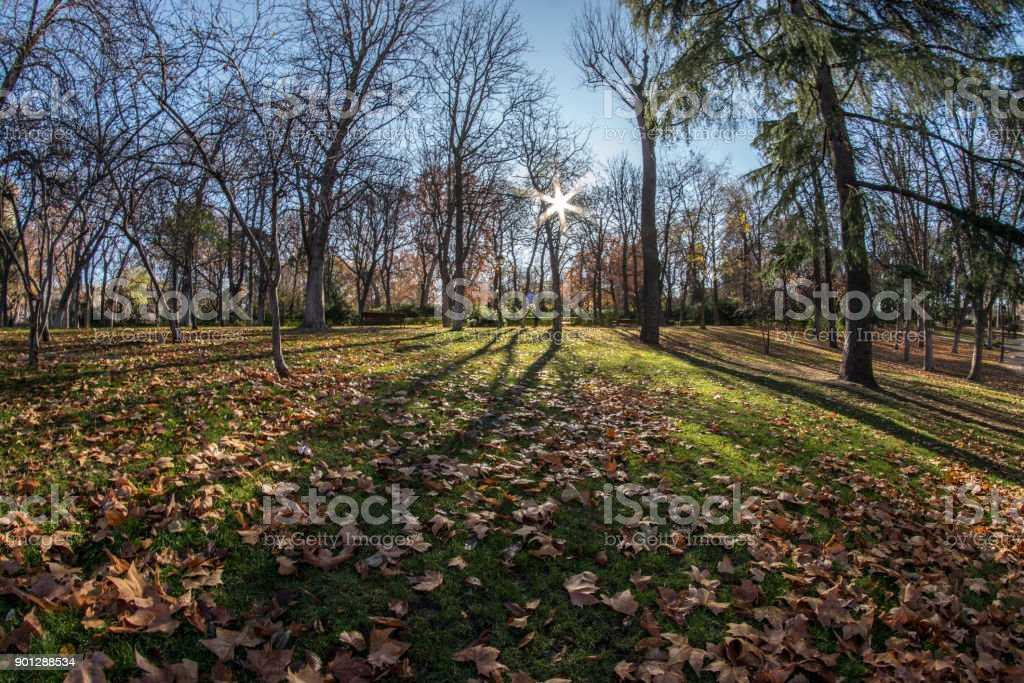 Fish eye view 180 of a space with trees of the Retiro Park in Madrid city