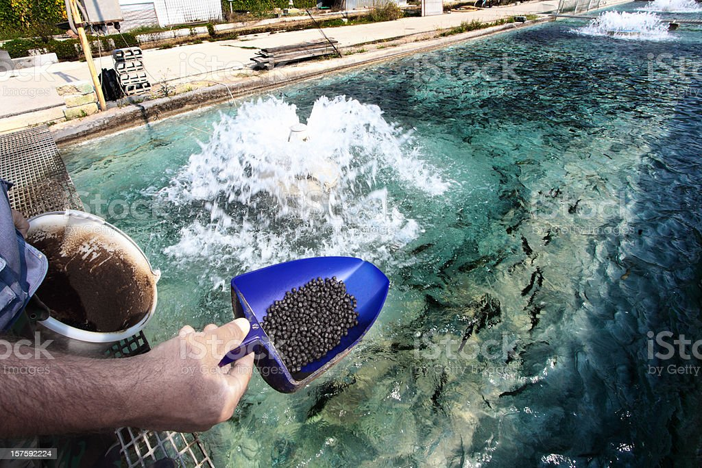 Fish farm at Bussi, in Abruzzo stock photo