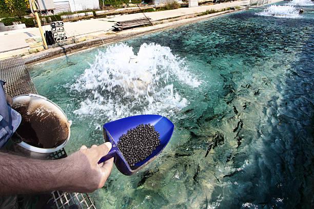 Criadero de pescado en Bussi de Abruzzo - foto de stock