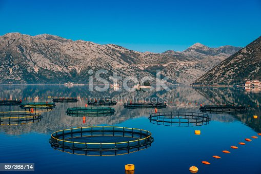 istock Fish farm in Montenegro. The farm for breeding and fish farming 697368714