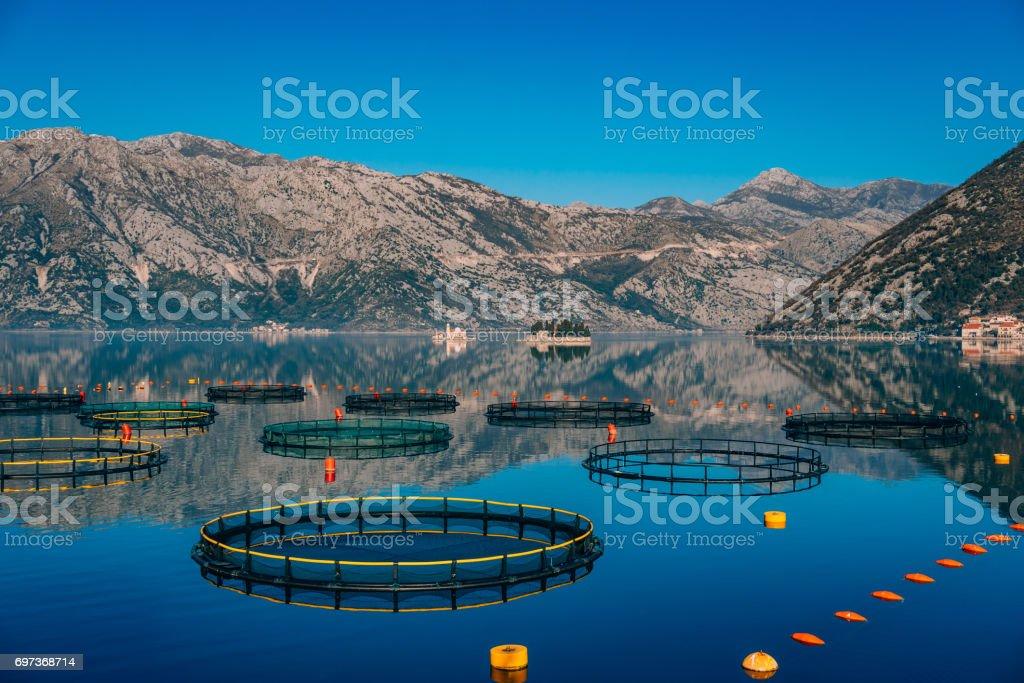 Fish farm in Montenegro. The farm for breeding and fish farming stock photo
