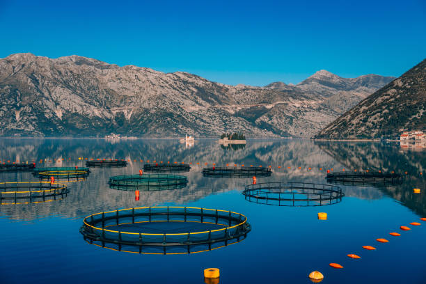 fish farm in montenegro. the farm for breeding and fish farming - aquacultura imagens e fotografias de stock